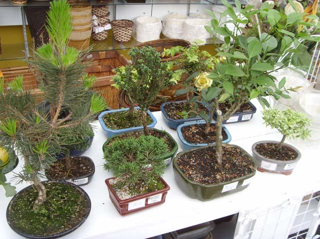 de Flores, Flores em Vasos, Flores para Jardins, Plantas ornamentais