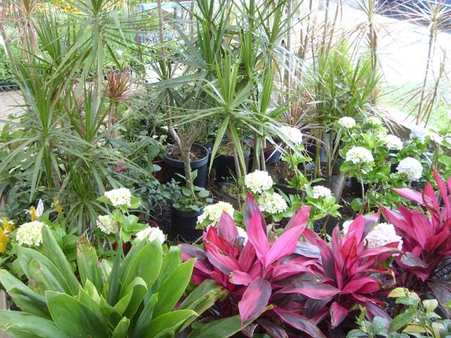 , Buquet de Flores, Flores em Vasos, Flores para Jardins, Plantas