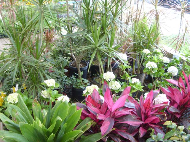 Plantas perenes - ::::Floricultura Bom Jardim ...